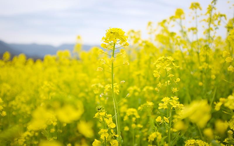 Pegels Aktuelles - Übersicht Blühstreifenmischung