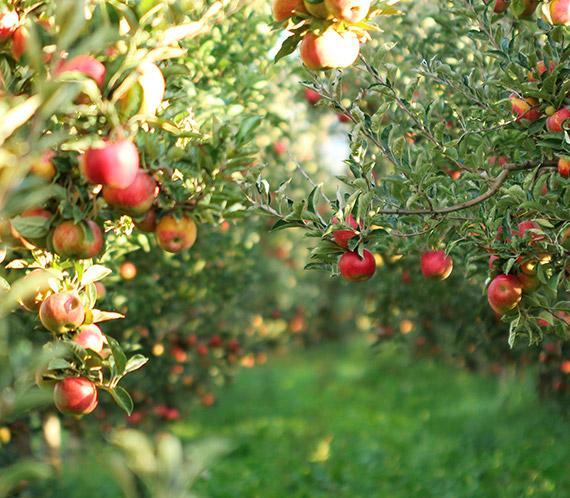 Obstbaukatalog 2020 Vorschaubild