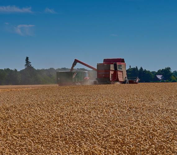 Marktinfo Getreide und Raps 2020